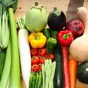 【ふるさと納税】【リピーター続出】南国高知より まごころ野菜...