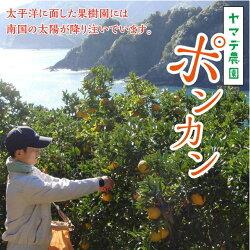 【ふるさと納税】訳あり ポンカン 5kg 安和ポンカン 産地直送 柑橘 フルーツ みかん 送料無料 画像1