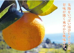 【ふるさと納税】訳あり ポンカン 5kg 安和ポンカン 産地直送 柑橘 フルーツ みかん 送料無料 画像2