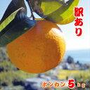 【ふるさと納税】訳あり ポンカン 5kg 安和ポンカン 産地直送 柑橘 フルーツ みかん 送料無料