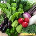 【ふるさと納税】野菜 「2人暮らし」にぴったり 南国土佐のお野菜「食べきりサイズ」