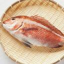 【ふるさと納税】本場須崎のブランド鯛「乙女鯛フィーレセット」 産地直送 送料無料 お刺身 鯛しゃぶ