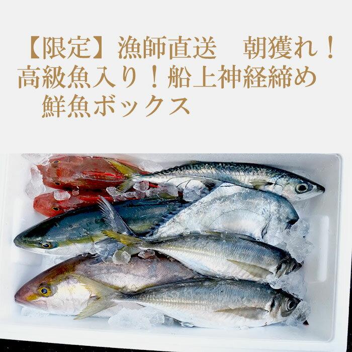 高知県須崎市『漁師直送 朝どれ 神経締め 鮮魚ボックス』