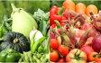 【ふるさと納税】南国高知よりまごころ野菜セット〜野菜でお家ごはん〜