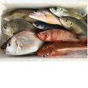 【ふるさと納税】【B-36 】 以布利定置網旬の朝獲れ鮮魚詰