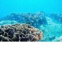 【ふるさと納税】【BN-1】竜串海域公園 1ボートダイビング...