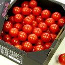 【ふるさと納税】≪残数わずか≫フルーツトマト 完熟 糖度8以上高糖度&高機能性 フルーツトマト1kg送料無料 数量限定 ギフト