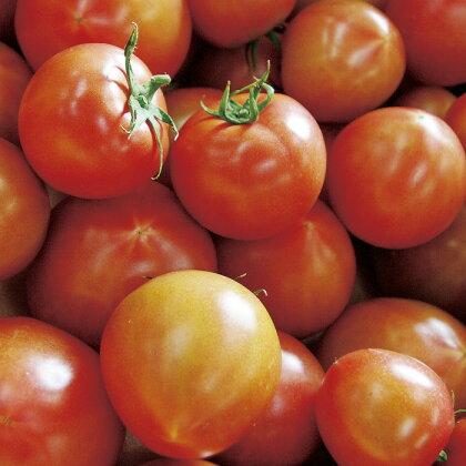 〈4月〜5月末 発送〉絶妙な酸味と甘みのバランス フルーツトマト