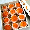 【ふるさと納税】〈2月10日?3月20日配送〉とろっとジューシー柑橘の女王 せとか3kg