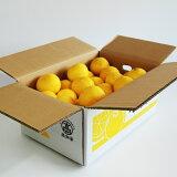 【ふるさと納税】土佐の高知のくだもの畑 ハウス小夏(ギフト用)5Kg小夏 フルーツ 柑橘 デザート送料無料 のし 贈り物 ニューサマーオレンジ C-126
