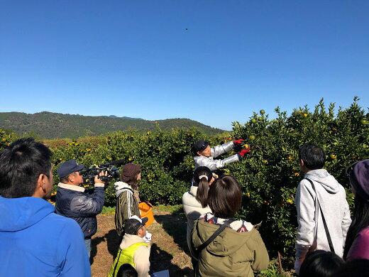 【ふるさと納税】F131 高知県東洋町産のぽんかん収穫体験