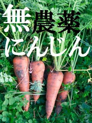 【無農薬♪期間限定募集 平成30年1月発送開始】生で食べてもあま〜い 無農薬で育てた土付きにんじん2kg