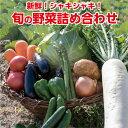 【ふるさと納税】ve001 新鮮!シャキシャキ!旬の野菜詰め...