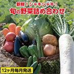 【ふるさと納税】31ve003 旬の野菜詰め合わせコース(年12回 毎月発送!!)