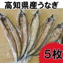 【ふるさと納税】高知県産うなぎの白焼き5枚