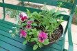 【ふるさと納税】北川村「モネの庭」から季節の寄せ鉢