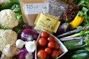 【ふるさと納税】朝どれ野菜のサラダセット