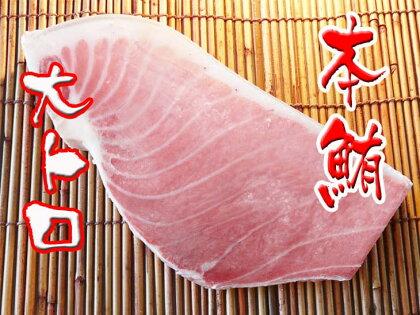 養殖本鮪大トロ500g 【koyofr】寿司 握り トロ マグロ
