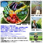 【ふるさと納税】土佐れいほく野菜(年12回)