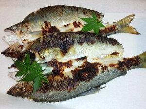 【ふるさと納税】鮎の風干し&塩麹漬けセット