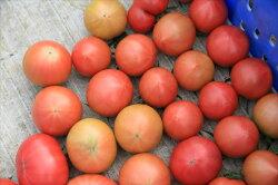 【ふるさと納税】水田さんのまっことうまいトマト 約2kg【高知県産 トマト フルーツトマト】 画像2