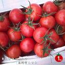 【ふるさと納税】<アイメック🄬で育てたましまファームの高糖度トマト】>高知県 佐川町 ましまファーム フルティカ ミニトマト フルーツトマト 約1kg 2020年12月以降出荷分受付中 先行予約【常温】送料無料