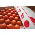 フルーツトマトメイン