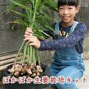 【ふるさと納税】Fis-02 【予約受付開始】知育にも人気!本格農業体験しょうが栽培キット