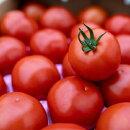 【ふるさと納税】Fbg-06赤さがリコピン満載の証!四万十産トマト「深紅」4kg
