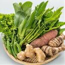 【ふるさと納税】Fkh-06農薬不使用・しまんと流域野菜セット(7種類)+野菜に合う調味料等1品
