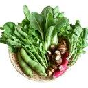 【ふるさと納税】Rfkh-02 しまんと流域野菜詰め合わせ5種類(定期便12か月コース)