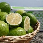 【ふるさと納税】[1309]黒潮町産温室グリーンレモン2kg