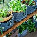 【ふるさと納税】3週間のコンポスト体験と野菜栽培がでいるLFCガーデニングセット