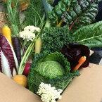 【ふるさと納税】福岡市内で栽培された国産の珍しいヨーロッパ野菜