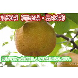 【ふるさと納税】中島農園の梨
