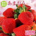【ふるさと納税】爽やか春あまおう【いちご】約285g×2パッ...