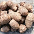 【ふるさと納税】小郡産の里芋「白芽大吉」2.5kg