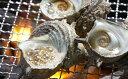 【ふるさと納税】福津市津屋崎産の天然サザエ4.5キロ!【魚貝類・サザエ・さざえ・シーフード】お届け:2019年7月上旬〜2019年8月末