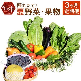 野菜果物定期便