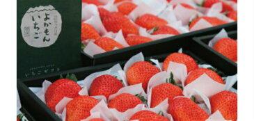 【ふるさと納税】よかもんいちご 大粒苺のギフトセットA 〜2月お届け分〜