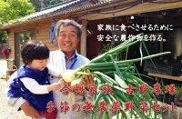 【ふるさと納税】古野農場の季節の無農薬野菜セット