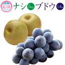 【ふるさと納税】ナシ×ブドウセット ナシ 5kg ブドウ 1