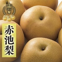 【ふるさと納税】赤池梨(秋月)約5kg