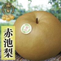 【ふるさと納税】赤池梨(新高)約5kg