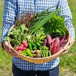 【ふるさと納税】C−020.佐賀産季節の旬野菜(15種類)