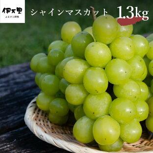 【ふるさと納税】シャインマスカット 約1.3kg 【8月中旬~10月上旬発送】 B201
