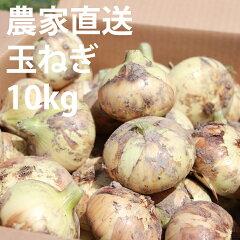 農家直送!佐賀県産玉ねぎ(10kg)M〜2Lサイズ