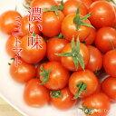 【ふるさと納税】真子のミニトマト(1,3kg)味の濃い ビタ