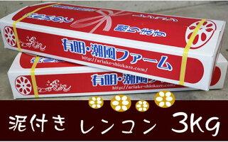 佐賀県産泥付きレンコン(3kg)