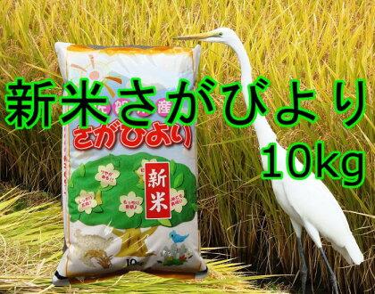 【新米】美味しさ自慢!2017年産米さがびより10kg